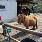 kleines Ponny
